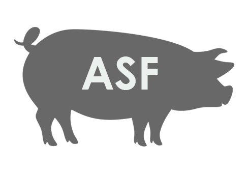 ASF.jpeg